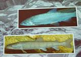 Foto: Foodwatch Fische