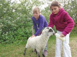 Foto: 2 Kinder füttern Schaf