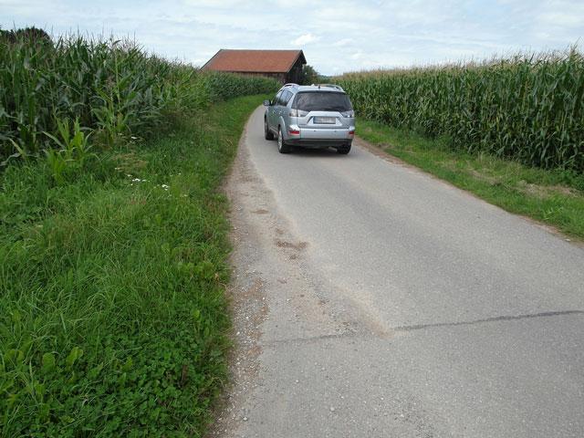 Geteerter Feldweg in vermaister Landschaft
