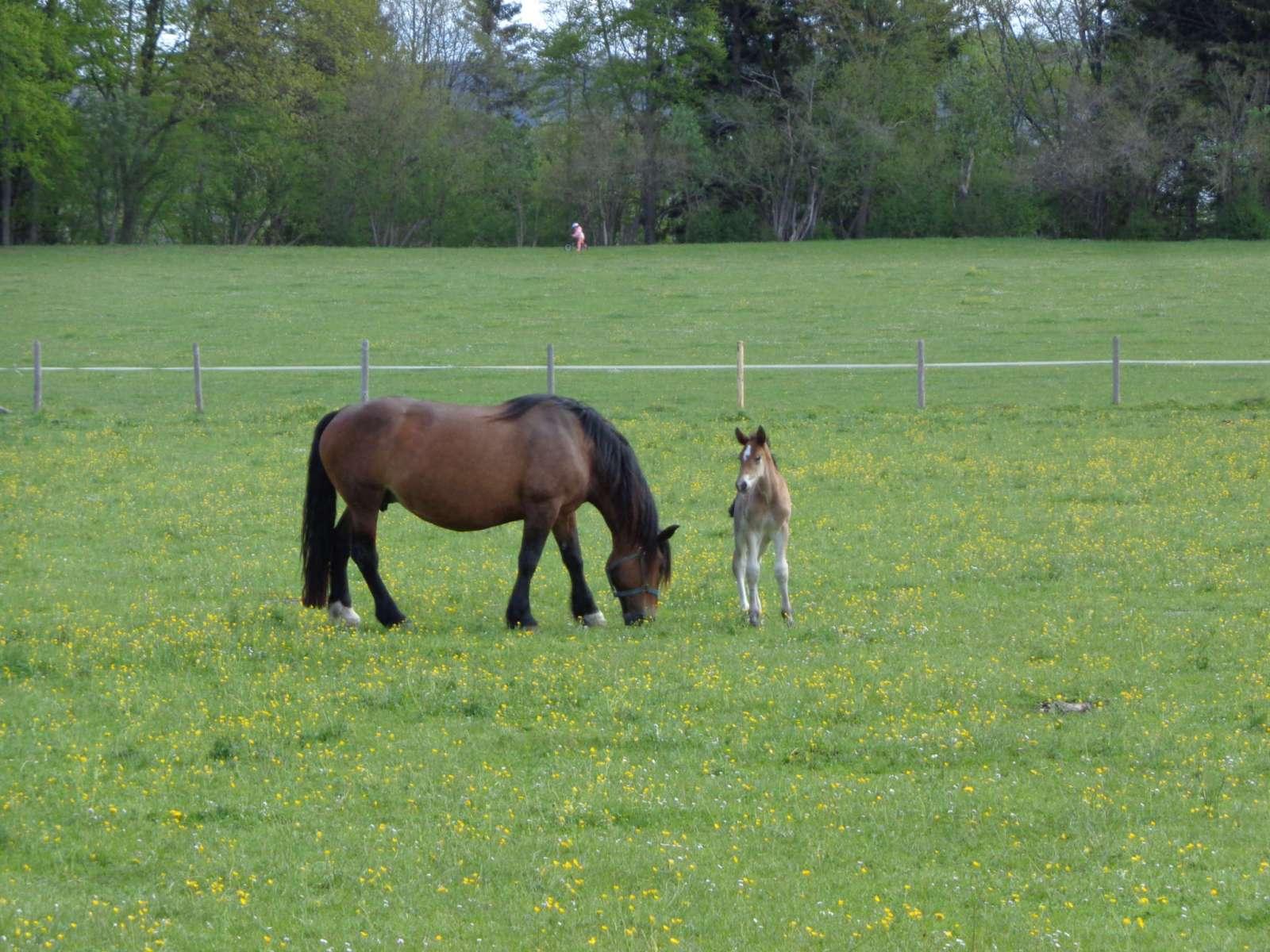 Fohlen mit Pferd