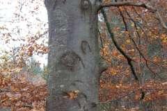 Baumhufeisen