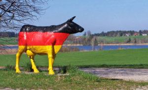 Foto Deutschland-Kuh